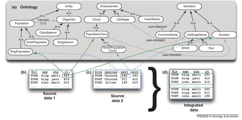 ontology_synthesis2